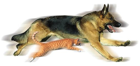 loomad2