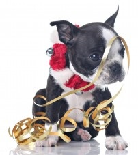 Holiday-Christmas-Dog-with-Ribbon