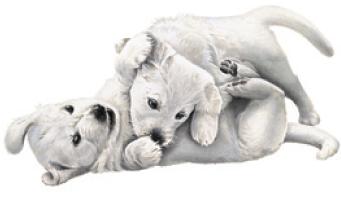 drontal_puppy_kutsikad