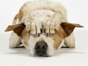 hirmunud koer_2