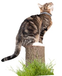 111108_Seresto_cat_looking-up