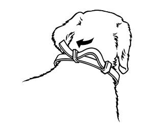 Halsband_Hund_1